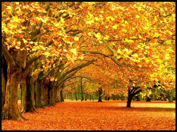 сочинения на тему осень не большое